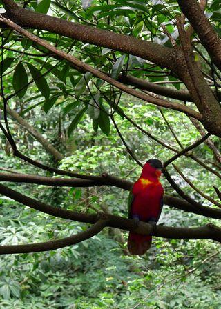 Birds02